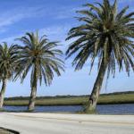 Local Landmark: The Ormond Scenic Loop
