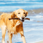 Summer Fun for Plantation Bay Dog Owners