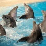 Day Trip: Marineland Dolphin Adventure