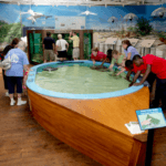Marine Science Center: Learning About Our Local Marine Life
