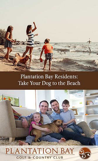 Plantation Bay Residents: Take Your Dog to the Beach
